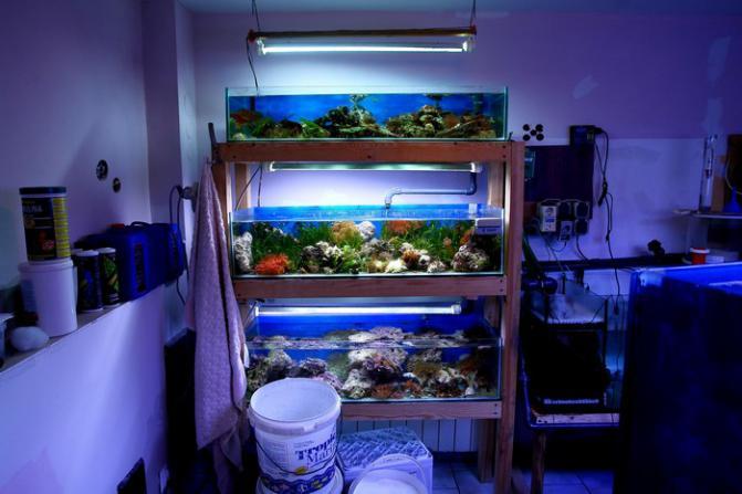akwarium_morskie_akwarystyka_morska_zwierzęta_morskie_akwarium_akwarium_słodkowodne_filtracja_rafowego_argus (6)