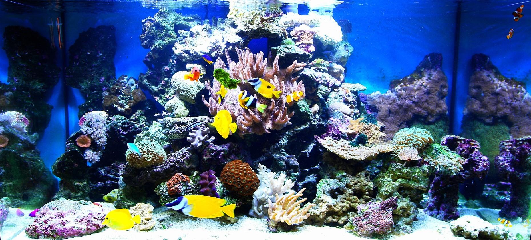 Sump Podzespoły I Sprzęt Filtracyjny Filtracja Akwaria Morskie