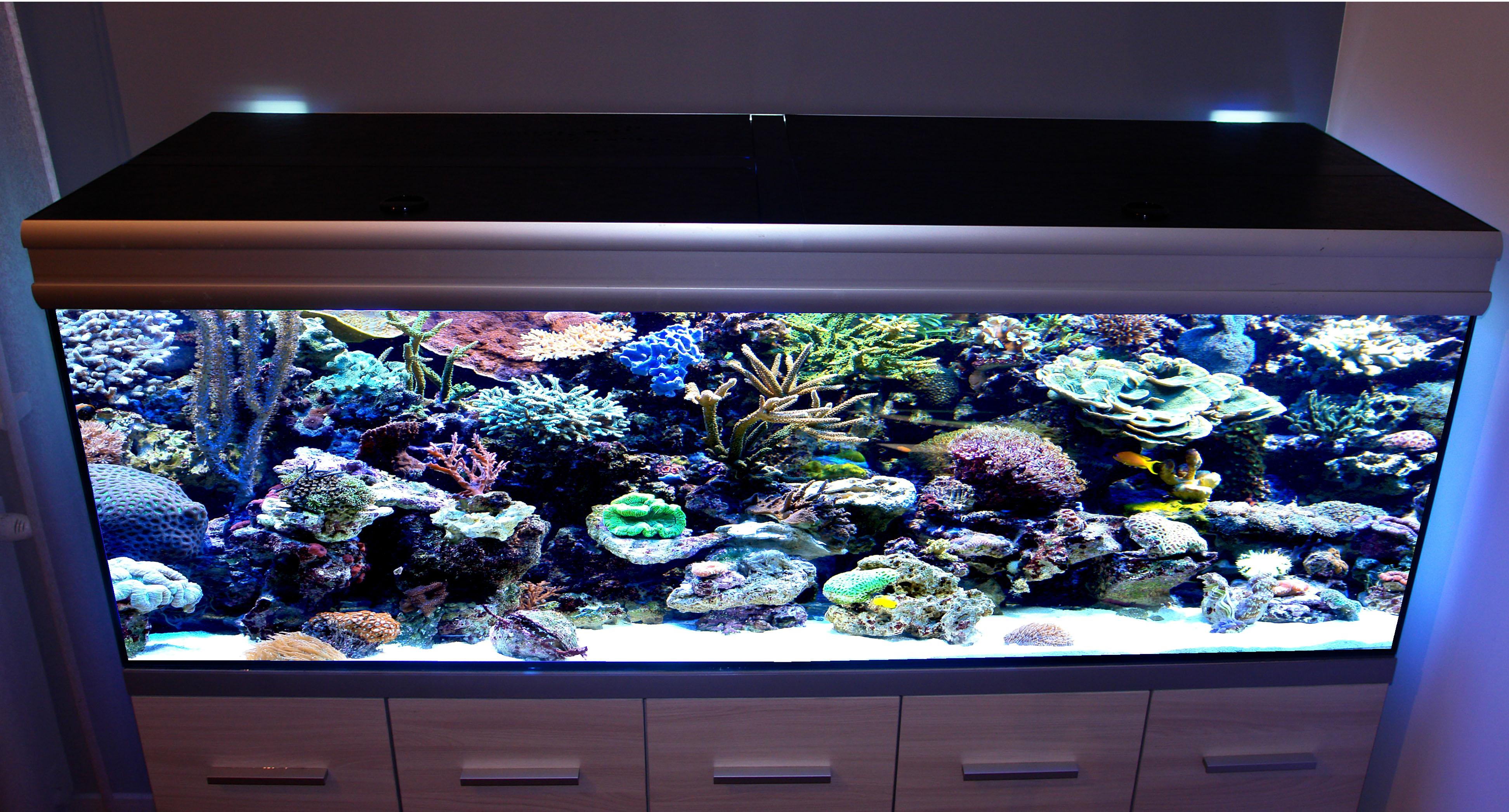 Oświetlenie Akwaria Morskie Oferta Argus Akwarystyka